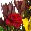 Стоковое фото: Composition of orchids, roses and leukospermums