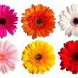 Stock Photo: Collection of gerber daisy flowers