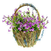 Purple spring flowers in a basket — Stock Photo