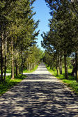 Empty Countryside Road Among Trees and Fields — Stockfoto
