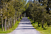 Empty Countryside Road Among Trees and Fields — Stok fotoğraf