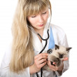 Veterinarny doctor — Stock Photo #10098838