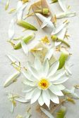 White water lily with natural soap — Stock Photo