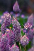 Soft flowers — Stock Photo