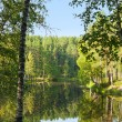 Summer landscape with forrest and river — Stock Photo