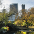 Central Park in NYC — Stockfoto #8029094
