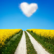 Oilseed and a heart shaped cloud - Stock Photo