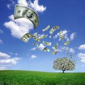 Falling dollar bills from money tree — Stock Photo
