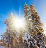 Winter in deep forest. — Stock Photo