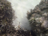 Sandstranden hål — Stockfoto