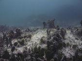 Cama de mar — Fotografia Stock