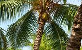 Tropical trees — Stock Photo