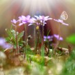 Tiny purple flowers under the sunlight - Stock Photo