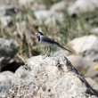 A little bird is sitting on a rock — Stok fotoğraf