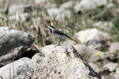 A little bird is sitting on a rock — Stockfoto