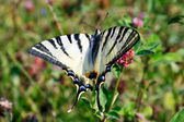 Day scene with swallowtail butterfly in natural environment — Stock Photo