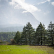 Green field in Himalaya mountains - Stock Photo