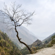Lonely tree in Himalaya mountains - Stock Photo