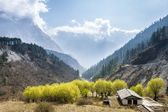 View of green trees in Himalayan mountains, Nepal — Stock Photo