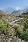 Spring in Himalaya — Stock Photo