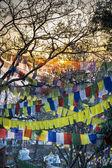 Bandeiras de oração tibetanas — Fotografia Stock