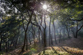 Misty forest with the rising sun. — Stock Photo