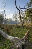 Nepal jungle (Chitwan). — Stock Photo