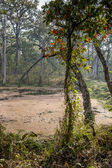 Small lake in Royal Chitwan, Nepal. — Stock Photo