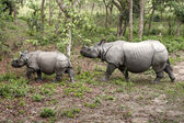 Wild Rhinoceros in Chitwan, Nepal — Stock Photo