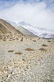 Trekking road in Himalaya — Stock Photo
