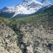 Spring time in Himalaya mountains — Stockfoto