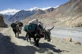 Caravan in Himalaya mountains — Stock Photo