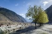 Himalaya landscape with green trees — Stock Photo