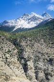Spring time in Himalaya mountains — Stock Photo
