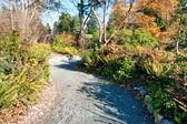 Camino del parque — Foto de Stock