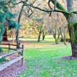 Washington Park Arboretum — Stock Photo #8423992