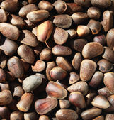 Pine nuts background, brown natural texture — Stock Photo