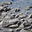 Water and stones riverside or seaside - Stock Photo