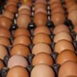 Stock Photo: Eggs rows pattern box food background
