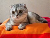 Cat lying g on colored coverlet — Stock Photo