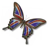 Storbritannien flagga på fjäril — Stockfoto