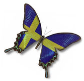 Sweden flag on butterfly — Stock Photo