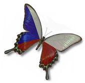 Drapeau de la république tchèque sur papillon — Photo