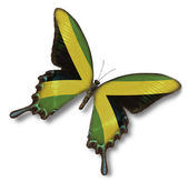 Jamaica flag on butterfly — Stock Photo