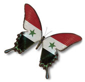флаг сирии на бабочка — Стоковое фото