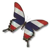 蝶にタイの国旗 — ストック写真