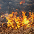 Burning dry grass in a forest — Stock Photo
