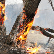 Burning trees in the forest — Stock Photo