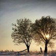 Two trees in a winter sunset — Foto Stock