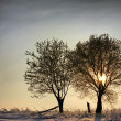 Two trees in a winter sunset — Stock Photo #10127903
